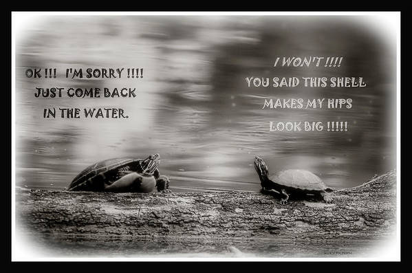 Turtles Art Print featuring the photograph 110219-1 by Mike Davis