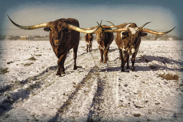 Longhorn Art Print featuring the photograph Longhorns in the Snow #2 by Linda Lee Hall