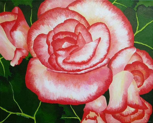 Begonia Art Print featuring the painting Begonias by Carol Sabo