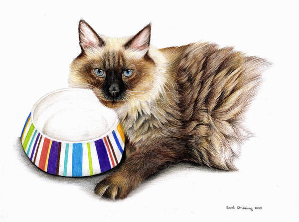 Cat and Bowl by Sarah Stribbling