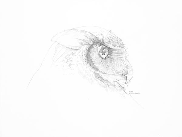 Owl Art Print featuring the drawing Great Horned Owl Sketch by Kirk Zimmerman
