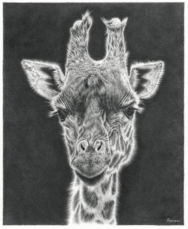 Giraffe Pencil Drawing by Remrov
