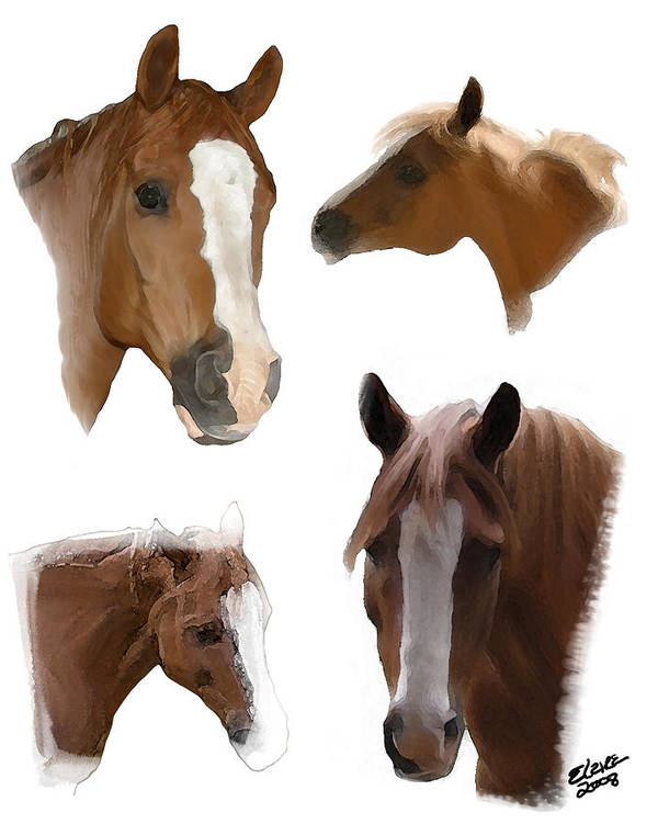 Arabian Horse Art Print featuring the painting The Faces of T by Elzire S