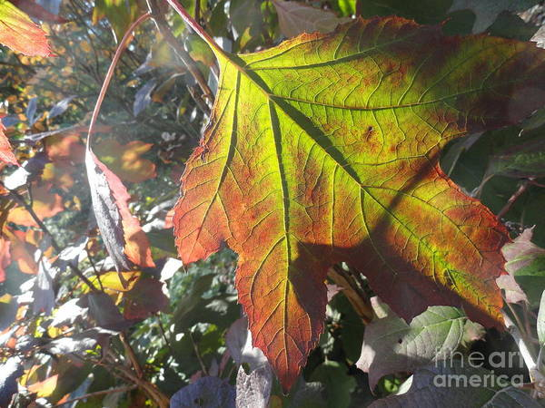 Leaves Art Print featuring the photograph Surrender by Trish Hale