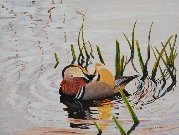 Realism Wildlife Duck Canadian Wildlife Art Print featuring the painting Mandarin Duck by Santo De Vita