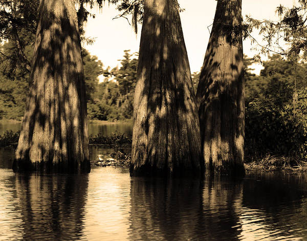 Swamp Art Print featuring the photograph Trees In The Basin by Maggy Marsh
