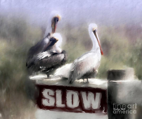 Seashore Birds Pelicans Tropical Humor Art Print featuring the painting Easily Follows Directions... by Carolyn Staut