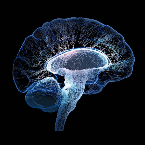 Human brain complexity by Johan Swanepoel