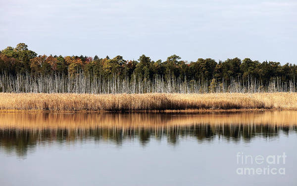 Pine Barrens Reflections Art Print featuring the photograph Pine Barrens Reflections by John Rizzuto