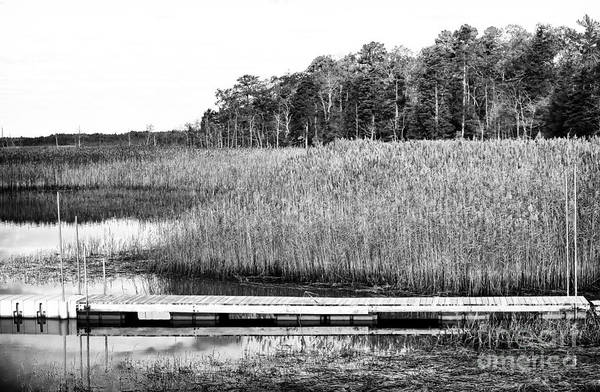 Empty Pine Barrens Print featuring the photograph Empty Pine Barrens by John Rizzuto