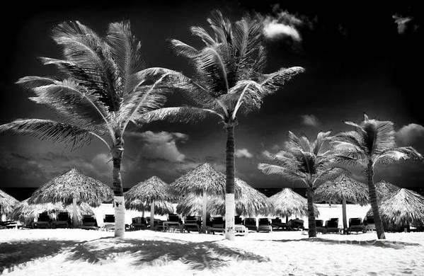 Punta Palms Art Print featuring the photograph Punta Palms by John Rizzuto
