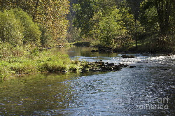 Trout Stream Art Print featuring the photograph Big Trout Waiting by Mark Messenger