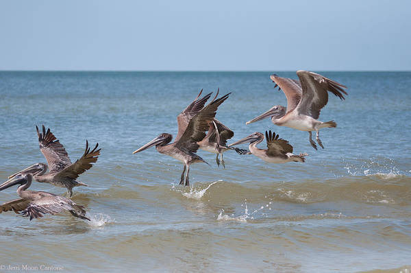 Birds Art Print featuring the photograph Taking Off by Jerri Moon