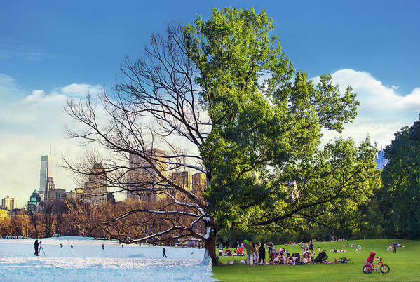 Tree Of Seasons Art Print featuring the photograph Tree Of Seasons by Mercedes Noriega
