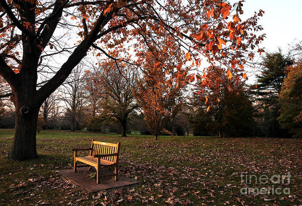 Bench Under The Tree Art Print featuring the photograph Bench Under The Tree by John Rizzuto