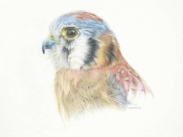 Illustration Art Print featuring the pastel American Kestrel by Kirk Zimmerman