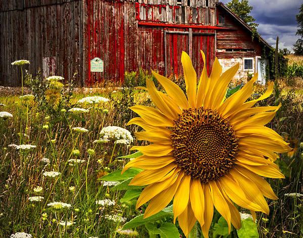 Barn Meadow Flowers by Debra and Dave Vanderlaan
