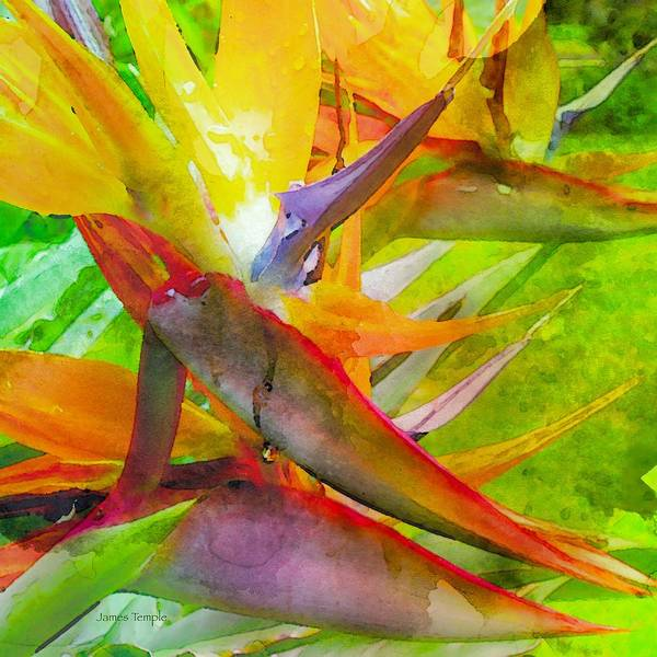 Tropical Art Print featuring the digital art Tropical by James Temple