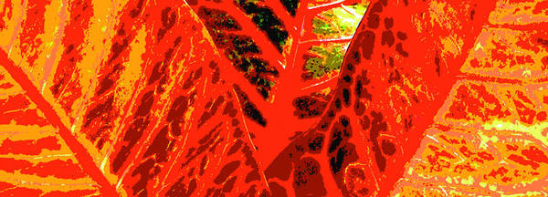 Tropical Heat Wave Art Print featuring the photograph Tropical Heat Wave by James Temple