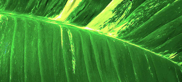 Waves Of Green Art Print featuring the photograph Waves of Green by James Temple