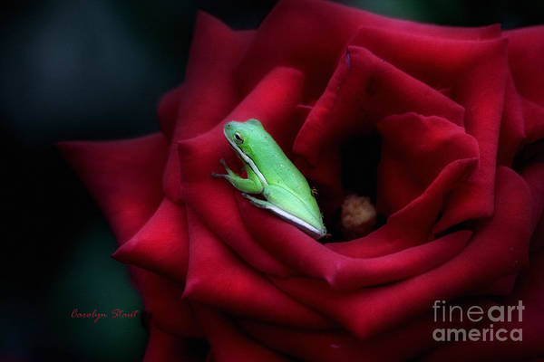 Roses Art Print featuring the photograph A Little Bed of Roses by Carolyn Staut