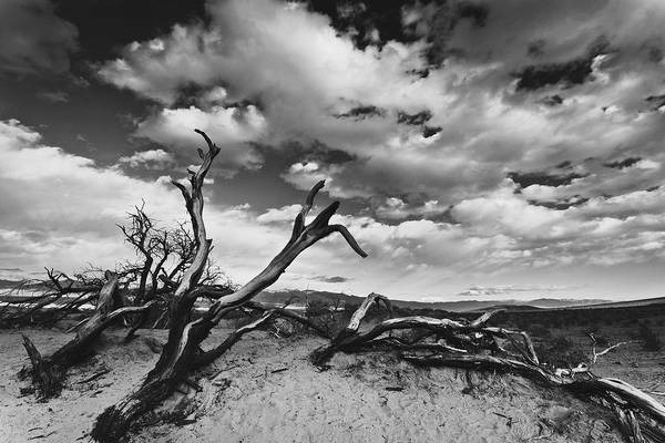 Landscape Art Print featuring the photograph Dead Trees at Mesquite Dunes by Nathan Spotts