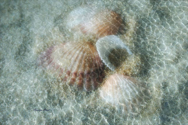 Shells Art Print featuring the photograph Step Lightly by Carolyn Staut