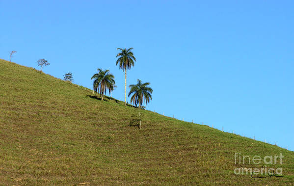 Downhill Art Print featuring the photograph Downhill by Carlos Alvim