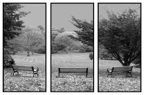 Nature Art Print featuring the digital art Bench View Triptic by Tom Romeo