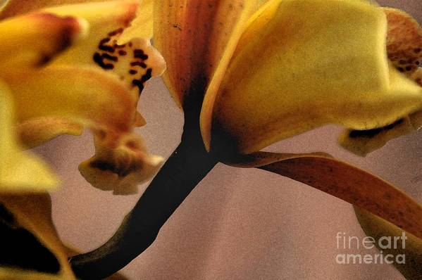 Orchid Art Print featuring the photograph Orchid Yellow by Michael Ziegler