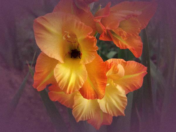 Yellow Orange Gladiola Art Print featuring the photograph Vintage Gladiola by Richard Cummings