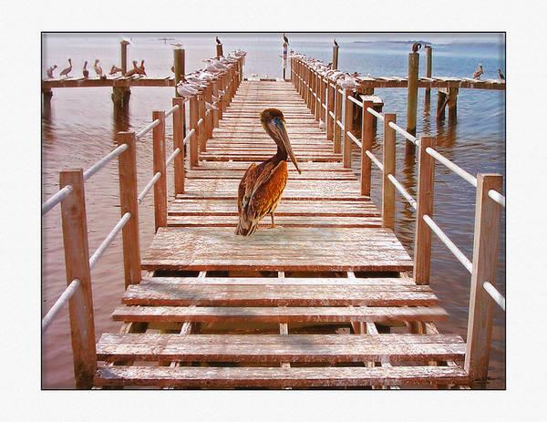 Warf Dock Water Birds Art Print featuring the digital art Cedar Key Wharf by John Breen
