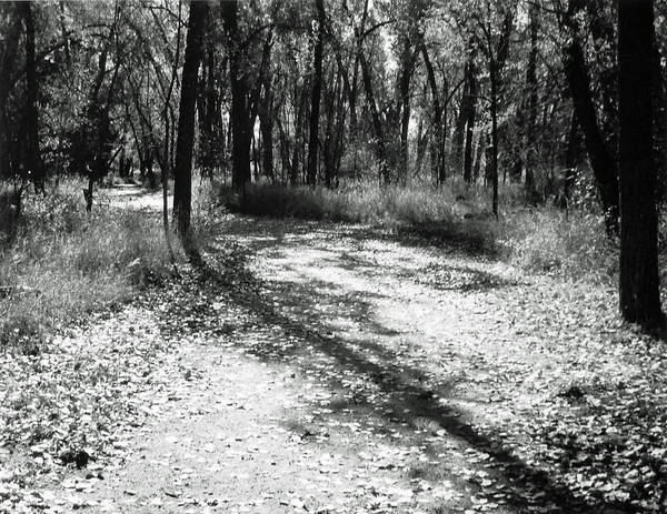 Landscape Art Print featuring the photograph Shadow Path by Allan McConnell