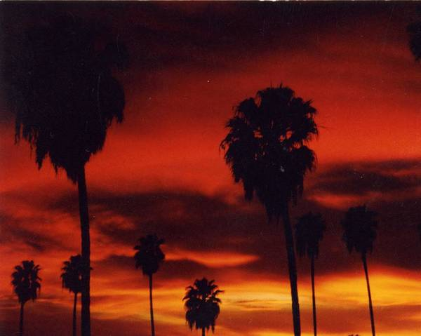 Palm Trees Art Print featuring the photograph Hollywood Sunset by Jennifer Ott