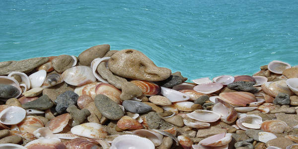 Sea Art Print featuring the digital art Seashell by Efrat Fass