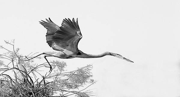Art Print featuring the photograph On The Wing by Joseph Reilly
