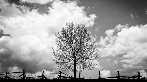 Fences Art Print featuring the photograph Broken Fences by Kevin Senter