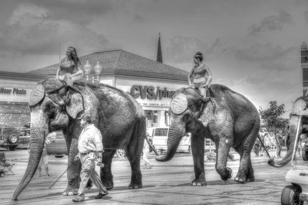 Peru Circus 2015 Elephants by Deanna Rushforth