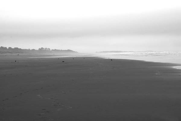 California Art Print featuring the photograph Clam Beach by Jessica Wakefield