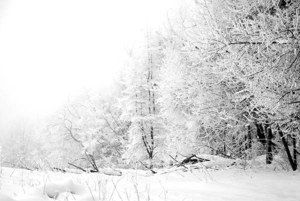 Frost Art Print featuring the photograph Tree Line by Jessica Wakefield
