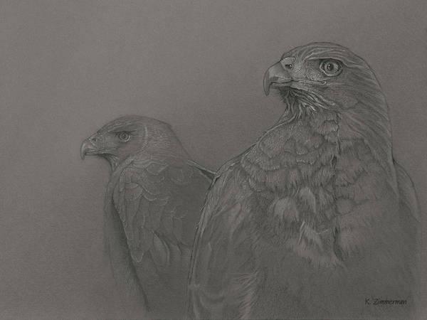 Birds Art Print featuring the drawing Harris's Hawks by Kirk Zimmerman