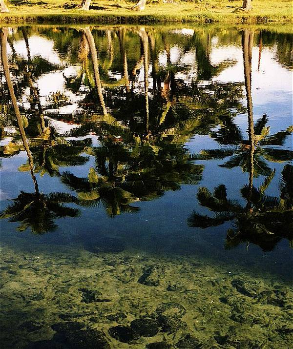 Palms Art Print featuring the photograph Reflected palms by Michael Lewis