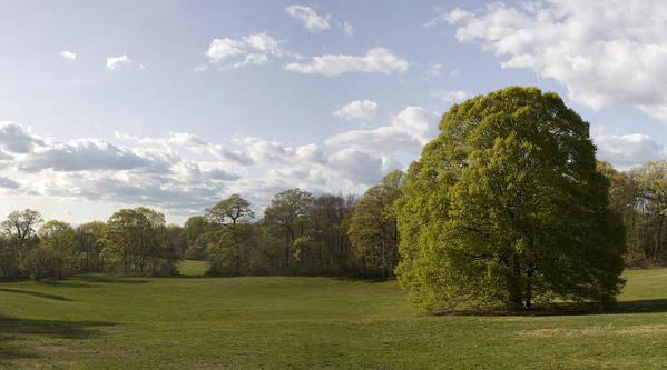 Caumsett Beech Tree by Patrick Keefe