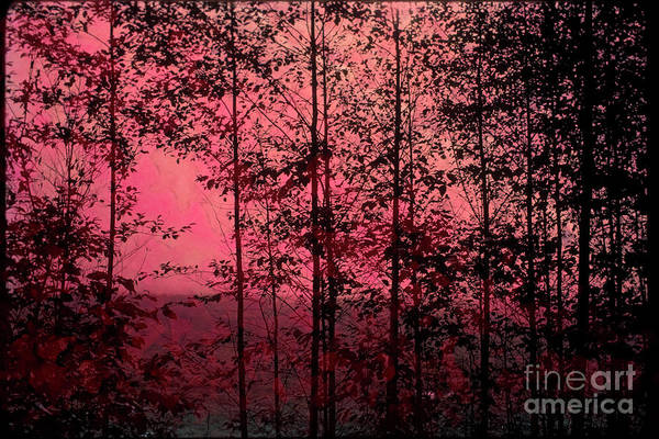 Trees Art Print featuring the photograph Through The Forest, Rose by Michael Ziegler