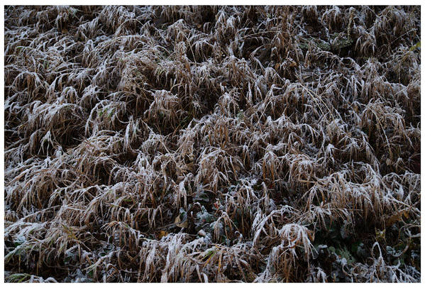 Frost Art Print featuring the photograph Early Frost by Mark Ivins