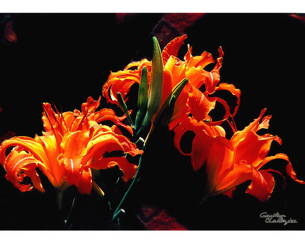 Flower Art Print featuring the photograph The Flower Of Fire by Gautam Chatterjee