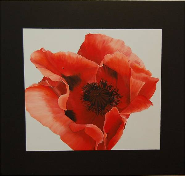 Poppy-flowers Art Print featuring the painting Poppy by Judith Hoof van