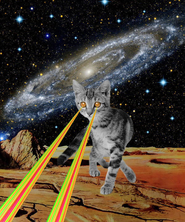 Cat Attack by Gloria Sanchez