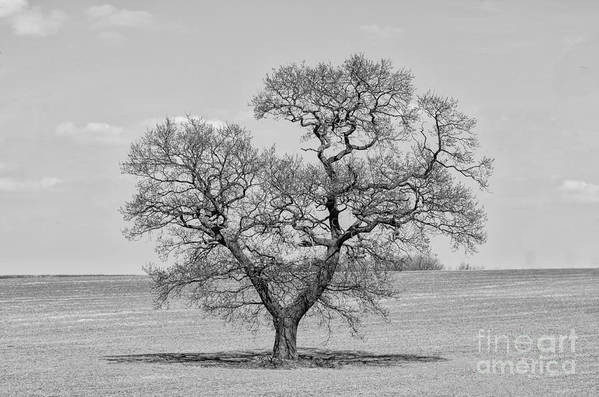 Oak Art Print featuring the photograph The Old Oak - Mono by Steev Stamford