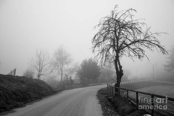 Art Print featuring the photograph Trees And Fog by Stefano Piccini